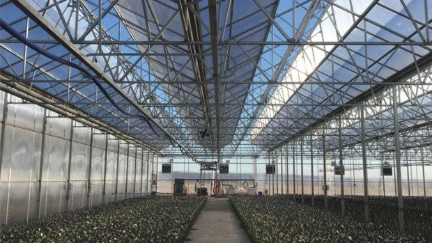 Dallas Johnson Greenhouses