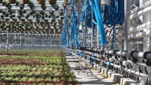 Irrigation boom at Cavicchio Greenhouses