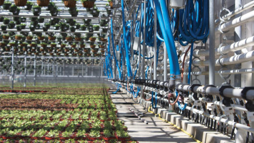 The Road to Sustainability at Cavicchio Greenhouses