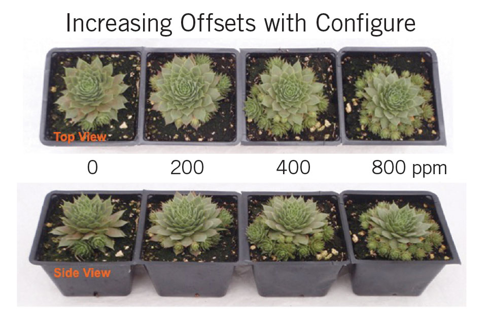 Branching Out With Configure on Succulents