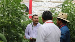 Learn How to Improve Your Greenhouse Tomato Production at the International Tomato Congress