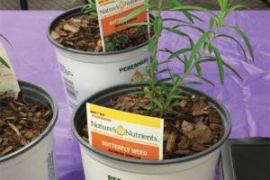 Milkweed Plants at Bell Nursery
