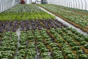 Prides Corner Farms herb house