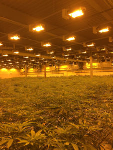 Choose the Right Location in Cannabis Growing Delta T