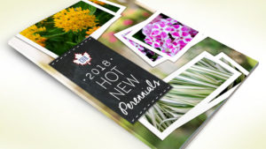 Eason Horticultural Resources Hot New Perennials Booklet
