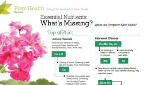 Essential Nutrients: What's Missing?