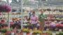 Plantpeddler Variety Day