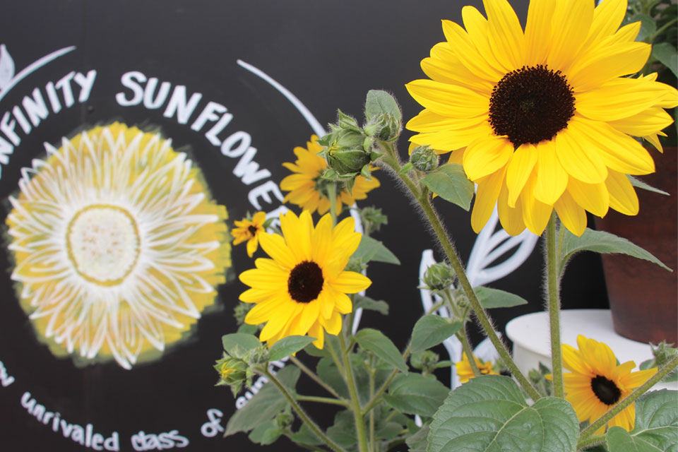 Sunfinity Sunflower Display sign at CAST 2017