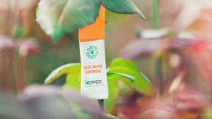 New Tool from Koppert Provides More Effective Thrips Management