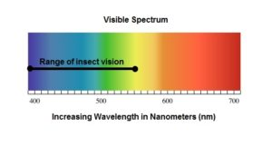 Insect Vision Spectrum