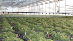 Boom Technology Helps Irrigate Multiple Crops at Foertmeyer & Sons