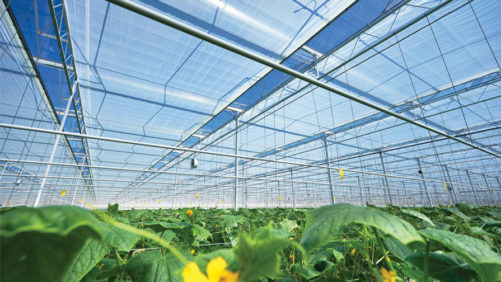Suppliers Seek to Help Greenhouse Growers Save on Energy Costs