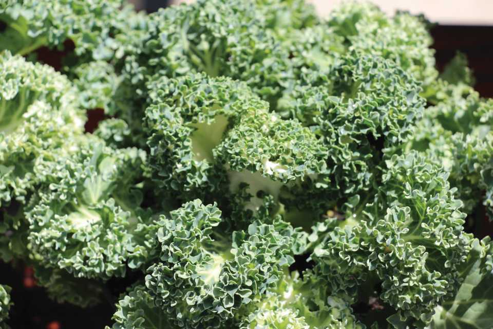 39 new vegetables and herbs for 2018 greenhouse grower mightylinksfo