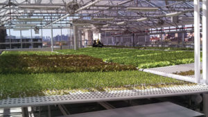 AmHydro Vegetable Production System