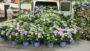 Bailey Nurseries Van at Cultivate