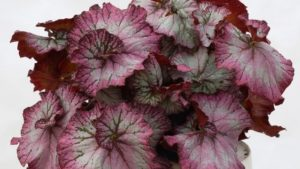 Standout Perennials from Terra Nova