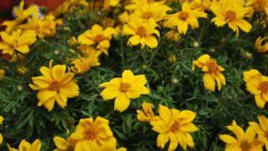 Allan Armitage: Why I've Become a Fan of Bidens