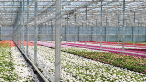 Biocontrols in a Greenhouse