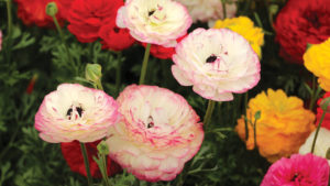 Greenhouse Growers Spring Crops Report: Sales Up for Most Growers