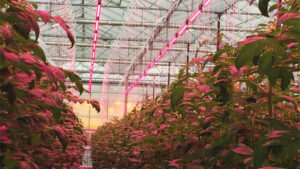 First-Ever GLASE Meeting Will Address Energy-Efficient Technology in Greenhouses
