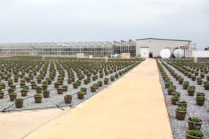 New Shipping Area at Catoctin Mountain Growers