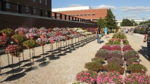 Standout Plants from the 2017 Ohio State University Field Trials