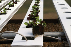 Oasis Grower Solutions Horticubes
