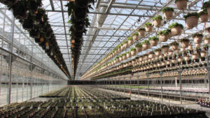 How Young's Plant Farm Invests in New Structures and Equipment
