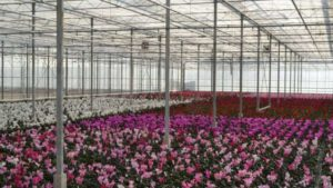 Common Greenhouse Maintenance Problems GVZ Glasshouses