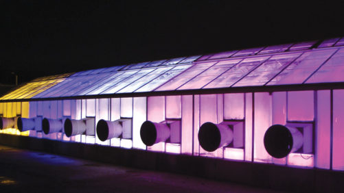 Supplemental Greenhouse Lighting to Produce Seedlings: LED or HPS?