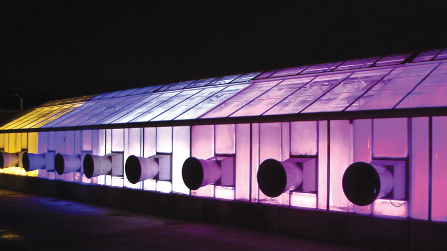 Supplemental Greenhouse Lighting To Produce Seedlings Led
