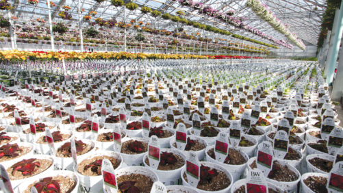 Two Head Growers and a Retail Live Goods Buyer Talk Best Practices for Quality