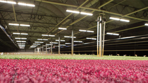How an LED Vertical Growing System Can Enhance Production