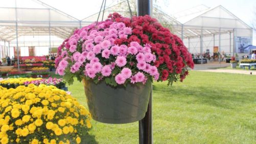 Greenhouse Grower - The leader in profits, production, and education