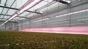3 Steps to Improving the Efficiency of Your LED Systems
