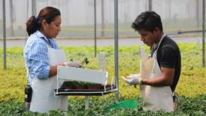 Cuttings Producers Improve Quality and Focus on Streamlining the Supply Chain