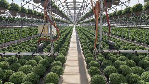 How to Balance Plant Nutrition and pH in Ornamentals
