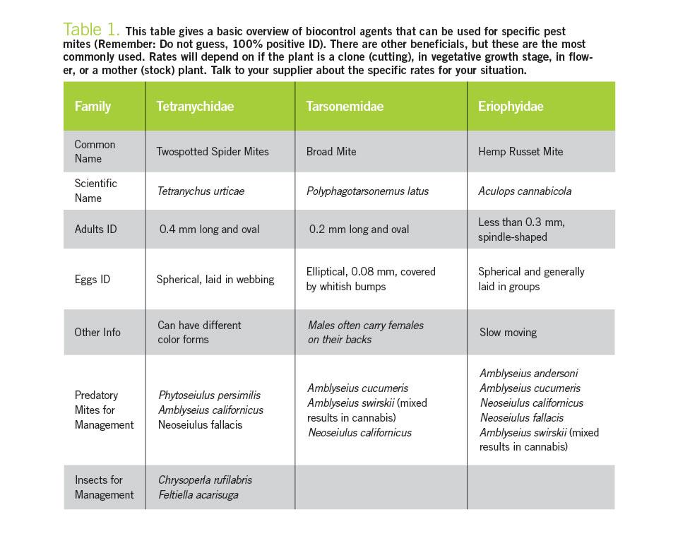 Biocontrols for Mites in Cannabis Chart