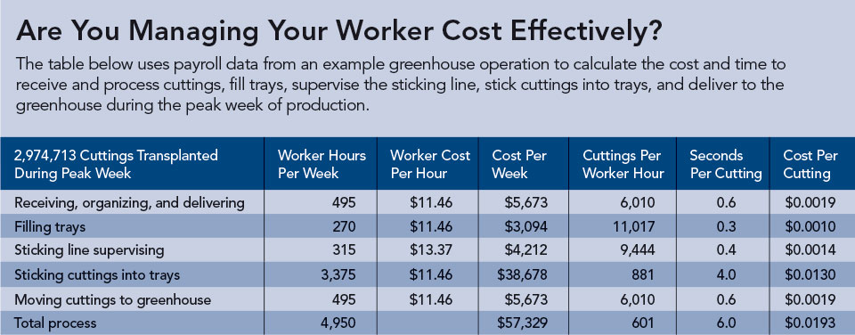 Chart on Managing Workers for Transplanting Cost Effectiveness