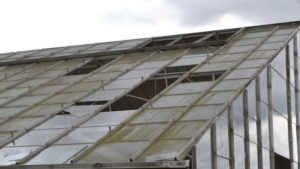 How to Deal With Common Greenhouse Maintenance Issues