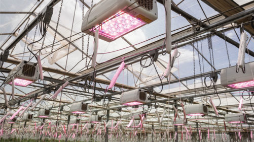 Greenhouse Lighting Suppliers Focused on Efficiency and Flexibility