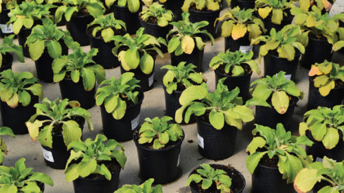 Herbaceous Perennial Nutrition: What You Need to Know