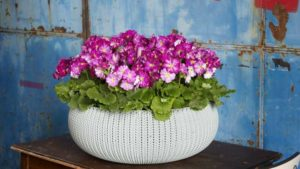 25 New Blooming Potted Plants for Luxury Sales