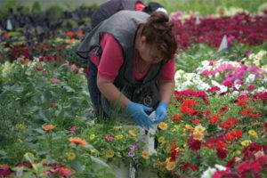 Seasonal Employees at Micandy Gardens