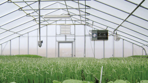 Tips on Adding Heat to Your Greenhouse for the Winter