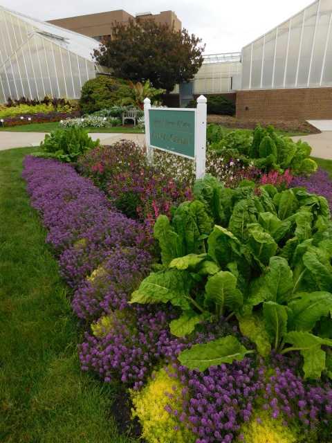 Annual-garden-displays