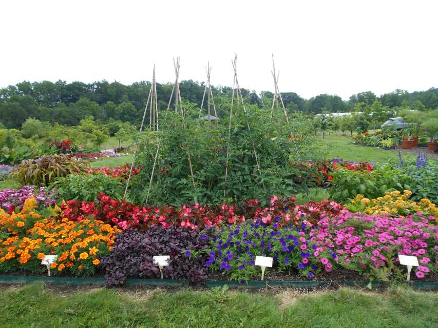 2017 Cornell University Field Trials Results - Greenhouse Grower