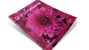 Ball Mums Catalog