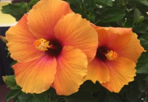Botany-Lane-Tropical