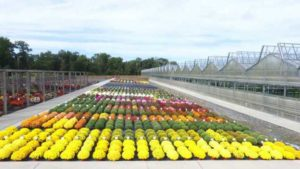 Lucas Greenhouses 2017 Container Trials